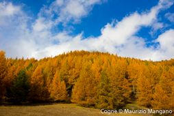 Woods - Cogne - Autumn
