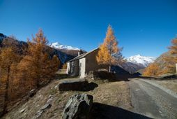 Crêt Chapel - Cogne - Autumn