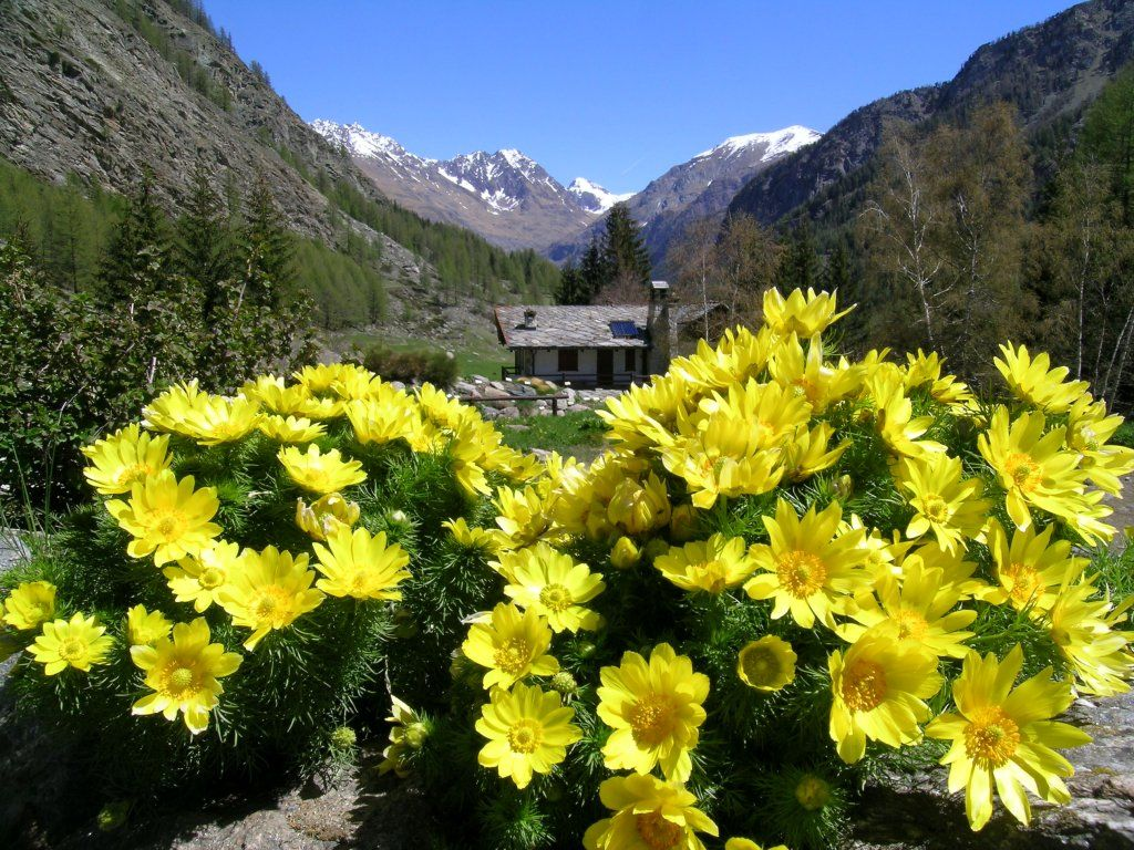 Paradisia Alpine Botanical Garden in Cogne - Aosta Valley