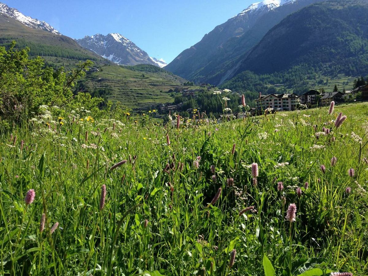 The Meadows of Sant'Orso in Cogne - Aosta Valley